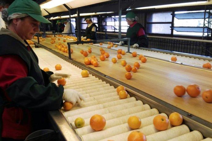 ¿Cómo es la variedad de mandarinas entrerrianas que partieron rumbo a las góndolas de Shangai?
