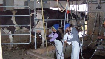 Hay escasez de leche en industrias y