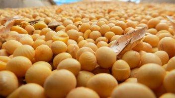 Argentina perdería hasta US$3000 millones por el derrumbe del precio de la soja