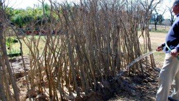 El Vivero Municipal entregó más de 800 árboles a vecinos y se agotó el