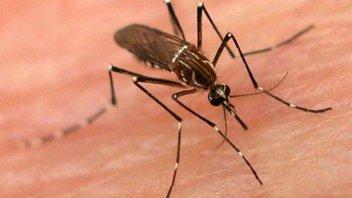 Santa Fe enfrenta un brote de dengue: confirman más de 100 casos