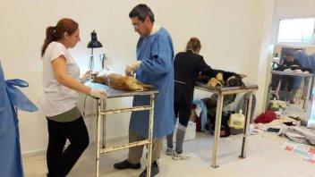 Se realizan los últimos operativos barriales de Salud Animal del mes de julio