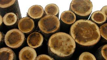 La industria de la madera reclama una moratoria para paliar la crisis