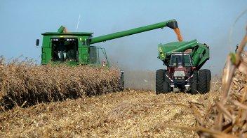 La cosecha de maíz en Entre Ríos llegó a 2,3 millones de toneladas y es récord