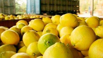Comenzó la cosecha de limones para exportar a EE.UU