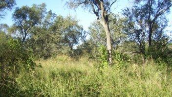 La provincia trabaja en el ordenamiento territorial de bosque nativo