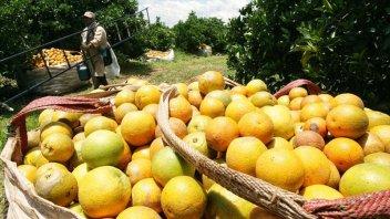Proponen que la citricultura se abra a nuevos mercados