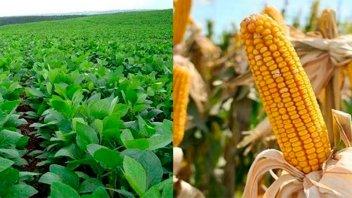 El maíz y la soja, complicados por la falta de lluvias