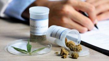 El Gobierno reglamentó parcialmente la ley de cannabis medicinal