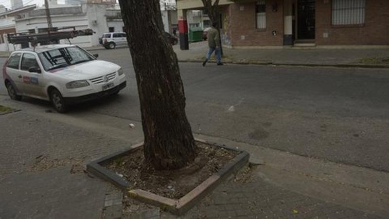 La víctima dejó el dinero en bolsas de residuos junto al árbol