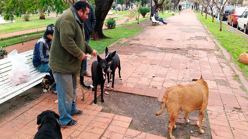 """José,  el """"Gitano"""", junto a sus perros."""