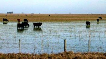 El Gobierno convocó a la Comisión de Emergencia Agropecuaria