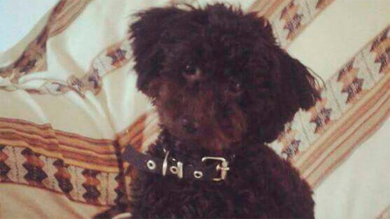 Ella es Preta, la perra heroína que salvó a una familia en un incendio
