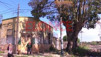 Desesperado pedido para que retiren añejo árbol que está destruyendo una casa