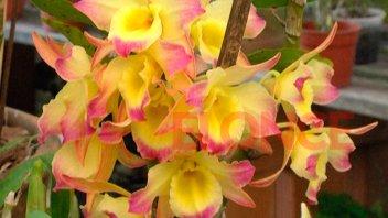 Las orquídeas, con aroma y color inigualables, presagian llegada de la primavera