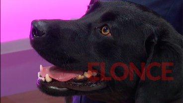 Lola, la perra que se sentó y ladró cuando encontró el cuerpo de Micaela García