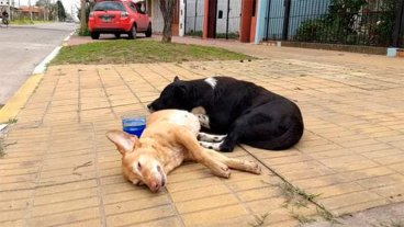 Amor canino: una perra murió y su compañero no quiso abandonarla