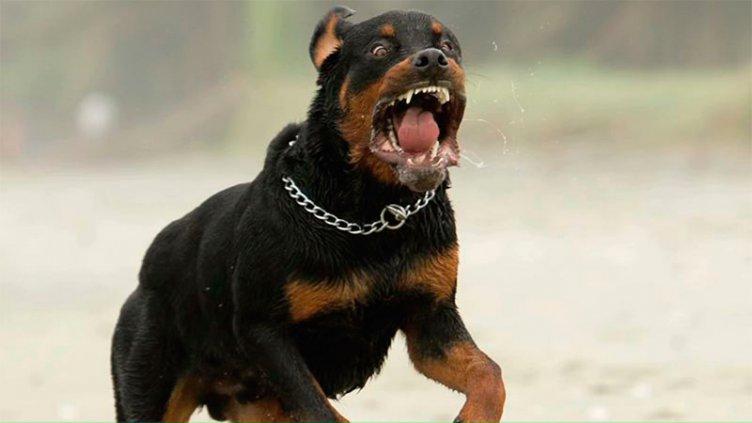 Por orden de un juez, sacrificaron a perro que mordió a dos menores y una mujer