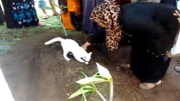 Gato se resiste a la muerte de su dueño e intenta desenterrarlo