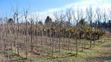 Entregaron más de 700 árboles a vecinos de Paraná