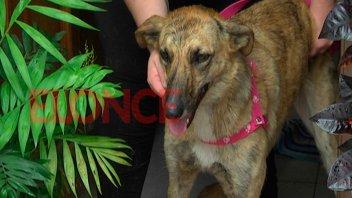 La historia de Peregrina: la perra que encontró un hogar tras la Procesión
