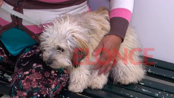 Harán hasta 25 castraciones diarias en el Centro de Atención para mascotas