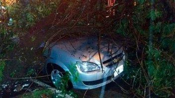 Fotos del temporal en Concordia: Árboles caídos sobre autos y techos dañados