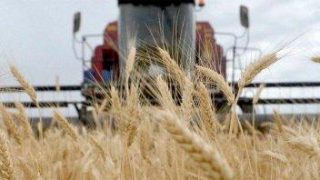 En tres meses, Argentina colocó la mitad de su saldo exportable de trigo
