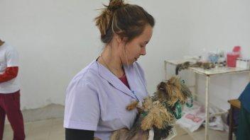 Operativos de Salud Animal para la próxima semana