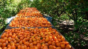 Aprueban aportes por 16 millones de pesos para productores entrerrianos
