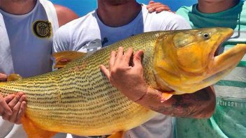 No pudieron ganar la Libertadores, pero pescaron un gran dorado en Entre Ríos