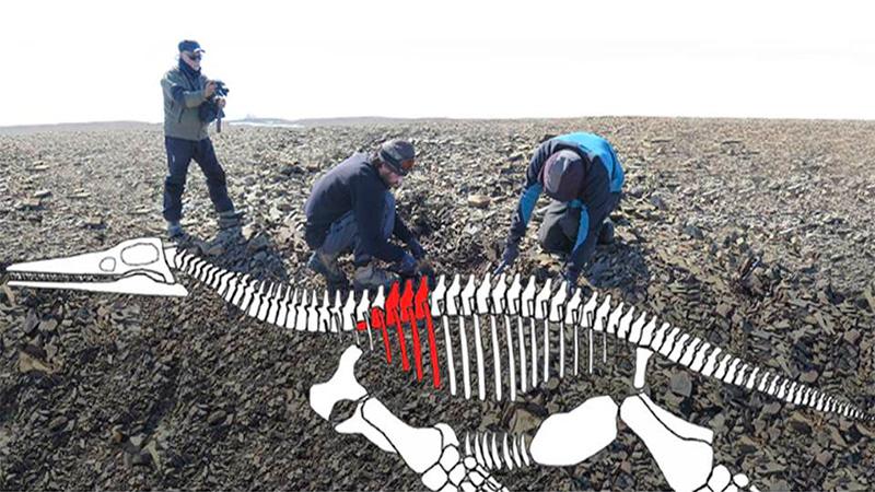 Hallan restos de lagarto gigante del jurásico en la Antártica [BBC]