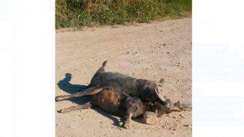 Un chivo fue decapitado en un presunto rito satánico