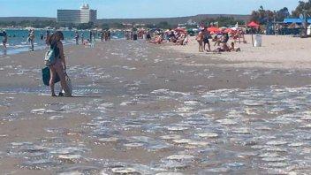 La costa de Puerto Madryn continúa plagada de medusas