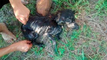 Arrojaron al río Paraná un perro con las patas atadas y una piedra