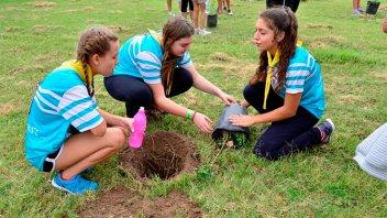 Adolescentes de toda la provincia plantarán palmeras en skate park de Villaguay
