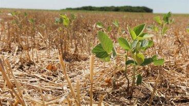 Sequía: Aseguran que