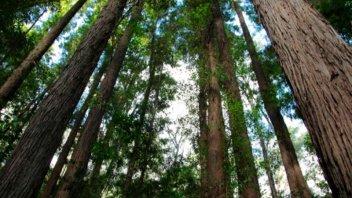 Entre Ríos participa del debate sobre la Ley Forestal