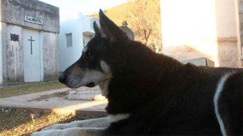 Murió Capitán, el perro que desde 2007 visitaba la tumba de su amo