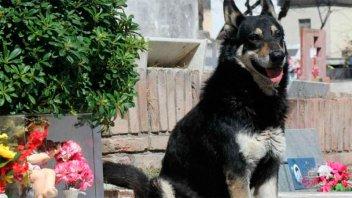 Tras la muerte del perro