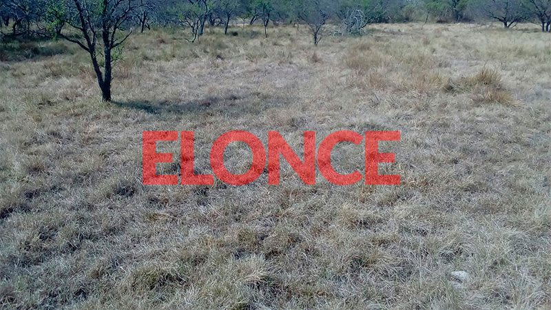 Campos ganaderos con pasto seco en el éjido de Viale.