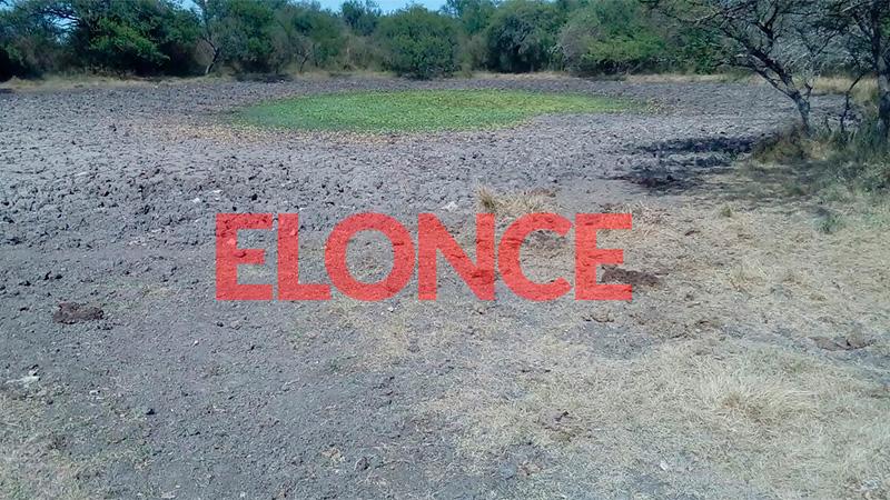Tajamar seco donde las vacas tomaban agua en el éjido de Viale.