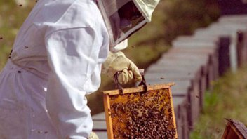 Aseguran que productores apícolas