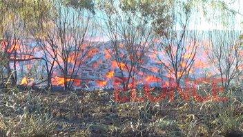 Incendio forestal afectó una vasta porción de monte nativo en La Picada