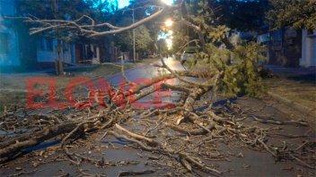 El fuerte viento generó la caída de árboles y otros inconvenientes