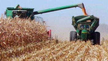 El sector agroindustrial consume el 6,7 por ciento de la energía del país
