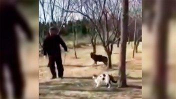 VIDEO: Registran el ataque de gatos callejeros a un jubilado y su perro