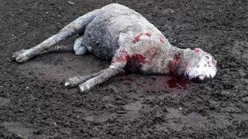 Perros cazadores hicieron estragos en una escuela agrotécnica
