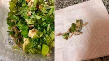 Pidió ensalada en un restaurante porteño y encontró una rana muerta camuflada