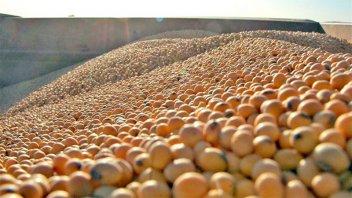 Por la guerra comercial entre China y EE.UU, cae el precio de la soja